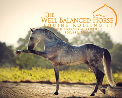 horse showing  flexible and balance movement